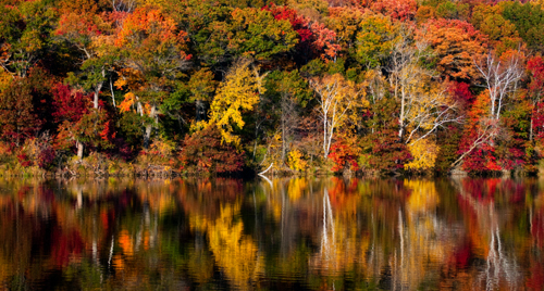 [Photo of autumn foliage reflected in a pond]