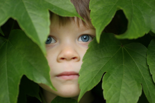 [Photo of a boy hiding in the bushes]