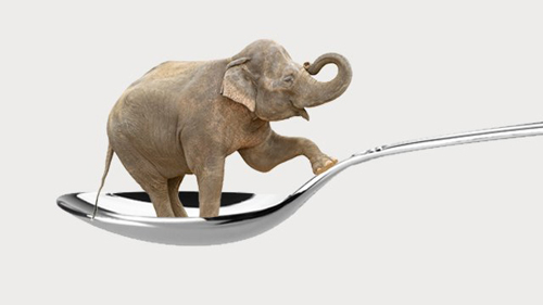 [Photo of an elephant perched on a spoon]