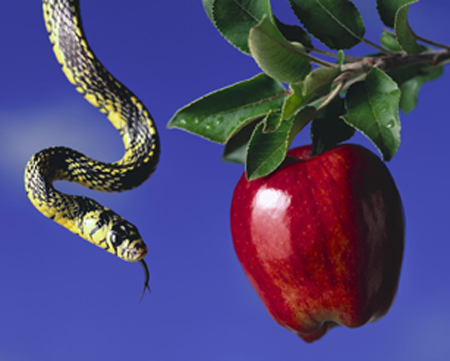 [Photo of a serpent and an apple]
