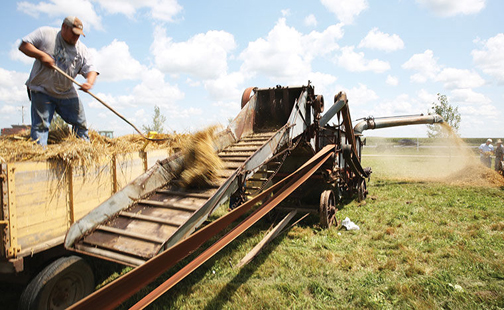 [Photo of threshing wheat]